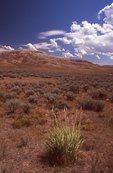 High Desert below Fossil Butte