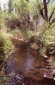 Bass Creek in the Chihuahuan Desert