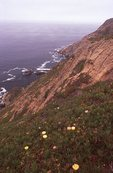 Sea Cliffs at Drake's Bay