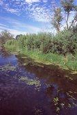 Brewster Creek