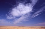 A Northern Plains Grassland