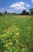 A Tallgrass Prairie in Northern Illinois