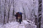 Winter Backpackers in Buckeye Gap on the Appalachian Trail