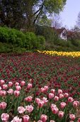 Commissioners Park during the Canadian Tulip Festival