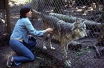 At the Pacific Northwest Wolf Reserve