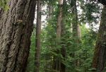 In Cathedral Grove on Vancouver Island