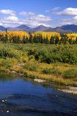 A Yukon Autumn Scene at Jarvis Creek