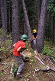 US Forest Service Trail Workers in Arizona's Blue Range