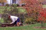 Planting Bulbs in October