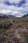 Backpacking in the Aichilik Valley