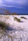 Sea Oats on a Florida Gulf Coast Beach