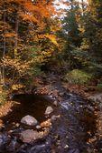 The Little Carp River
