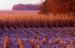 A Frosty Autumn Morning in Northern Illinois