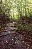 A Stream in Michigan's Upper Peninsula