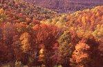 Autumn Foliage in Eaton Hollow