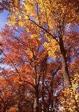Autumn Foliage along the Skyline Drive