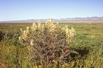 Springtime on the Carrizo Plain