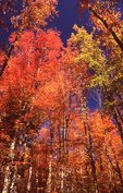 Autumn Foliage in the Porcupine Mountains