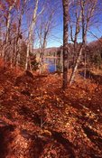 A Wetland in the Porcupine Mountains