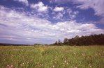A Virgin Prairie in Wisconsin