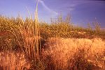 Virgin Prairie in Southern Saskatchewan