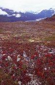 Autumn Tundra at Thompson Pass