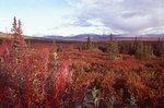 Autumn Tundra and the Alaska Range