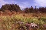 A Meadow near Lobster Cove on Monhegan Island