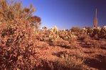 Morning in the Sonoran Desert