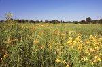 A Virgin Tallgrass Prairie in Eastern Kansas