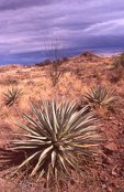 In Chihuahuan Desert Foothills