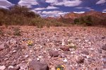 Hot Springs Wash in the Chihuahuan Desert