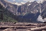 Driftwood Logs at Avalanche Lake