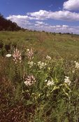 A Tallgrass Prairie in Northern Illinois