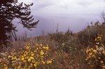 Wildflowers near Yellowstone Lake