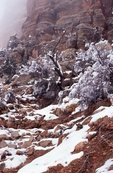 Snow along the South Kaibab Trail