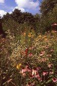 In the Photographer's Prairie Garden