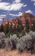 Big Sagebrush in Red Canyon