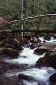 A Footbridge over Kephart Prong