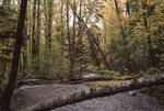 Landlooker Creek