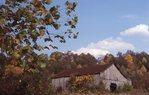 A Kentucky Tobacco Barn