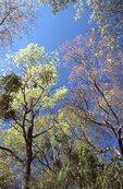 Springtime Foliage in the Chisos Mountains