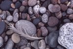 Lake Superior Beach Cobbles
