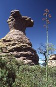 Camel's Head Rock and a Century Plant