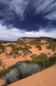 The Coral Pink Sand Dunes