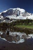 Mount Rainier Reflected in a Subalpine Tarn