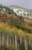 Autumn Foliage below McClure Pass