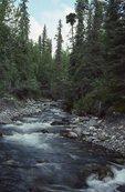 Strelna Creek