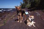 Wilderness Companions on the Lake Superior Shore