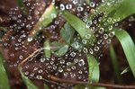 A Dew-Covered Spider Web